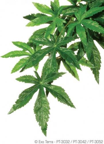 Plante Abutilon Exo-Terra pour terrarium