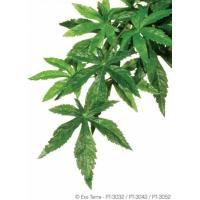 Planta abutilon Exo Terra