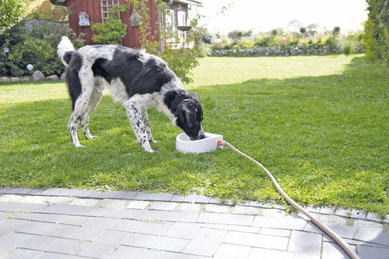 Abreuvoir extérieur automatique pour chien, chat ou petit bétail