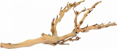 Natural root