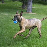 Jouet pour chien KONG Ultra squeakAir ball