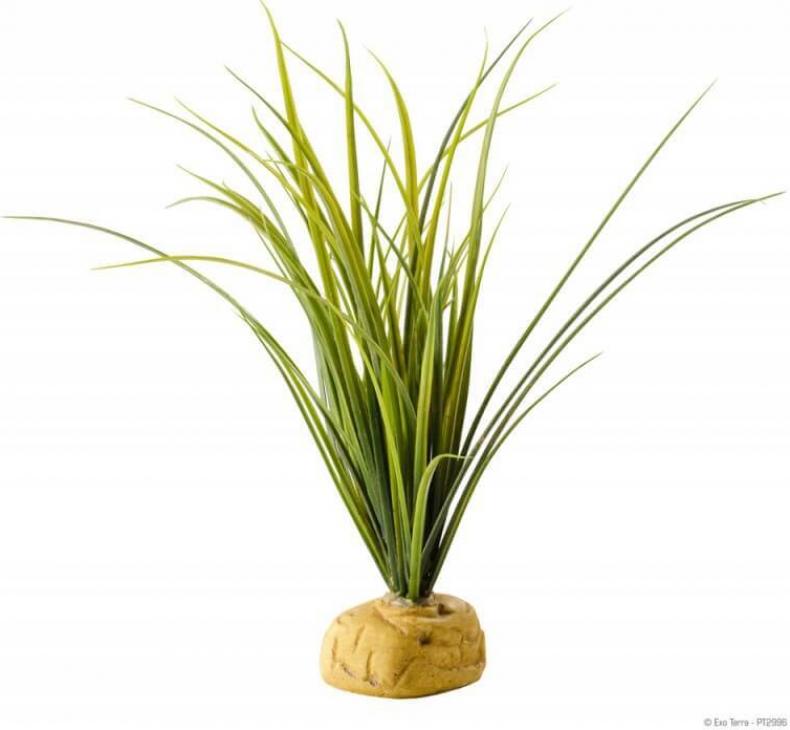 Herbe avec pierre Exo-Terra pour aqua-terrarium