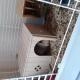 549_Maisonnette-en-bois-pour-rongeur---Plusieurs-tailles_de_Veronique_202877180860d4538d687162.25923314