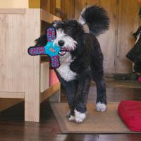 Jouet pour chien flottant KONG Ballistic Gliderz