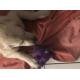 55177_Jouet-pour-chien-KONG-Phatz--Hippo_de_SYLVIE_1361139038602f602bc10df0.31244077