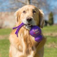 Jouet interactif pour chien KONG Wubba™