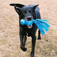 Jouet durable pour chien KONG Wubba™ Comet