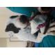55519_Jouet-en-peluche-pour-chien-KONG-Dynos-Triceratops-Pink---Deux-tailles-disponibles_de_Meline_14577590275f2f9128c4bfb8.61006176