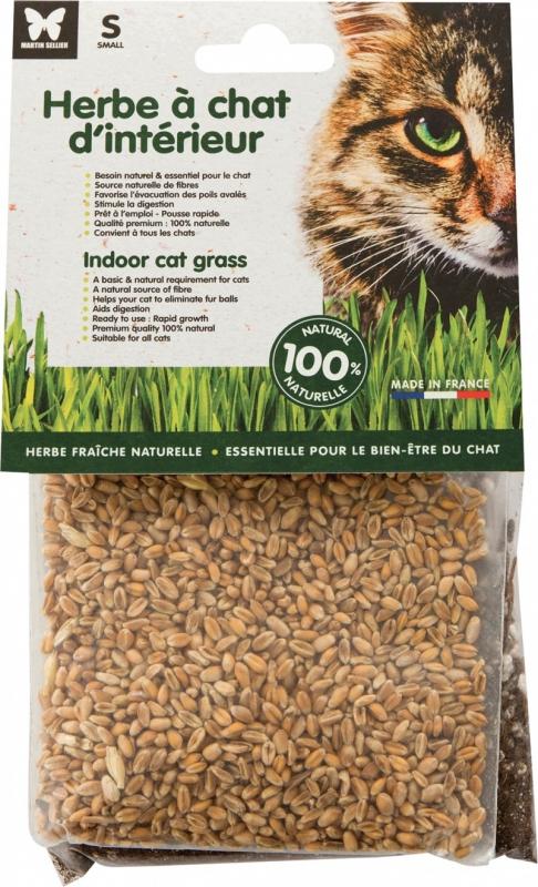 Herbe à chat d'intérieur à semer - Fabriqué en France 100% naturelle