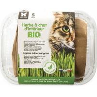 Herbe à chat Bio à semer en barquette
