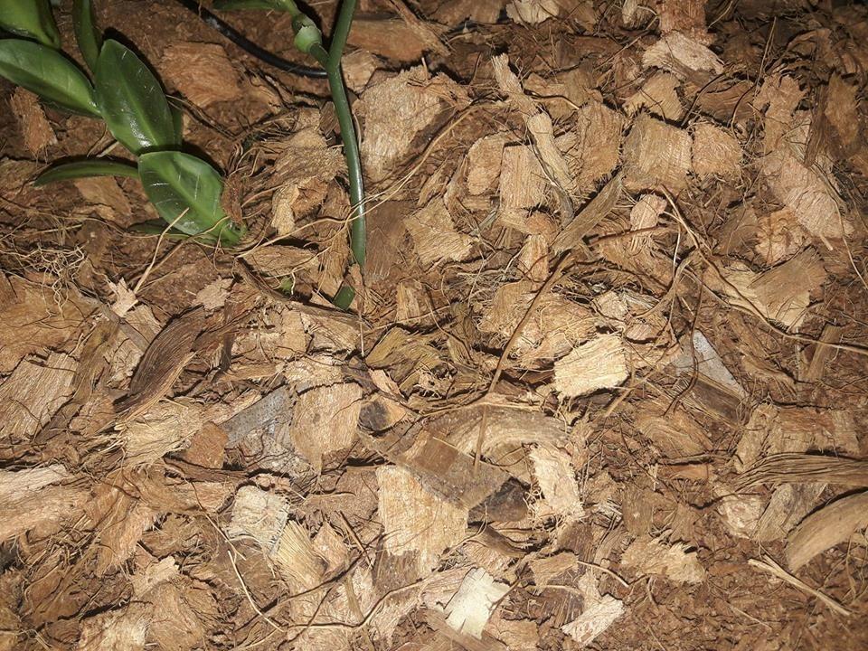 substrat fibre de coco exo terra sable et substrat. Black Bedroom Furniture Sets. Home Design Ideas