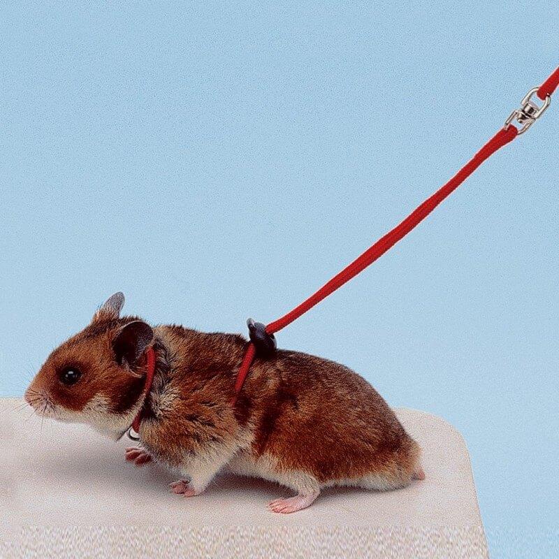 Harnais et laisse pour hamster NY HAM