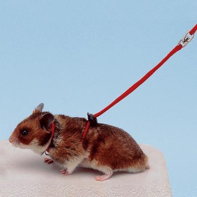 Hamstergeschirr