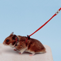 Harnais pour hamster
