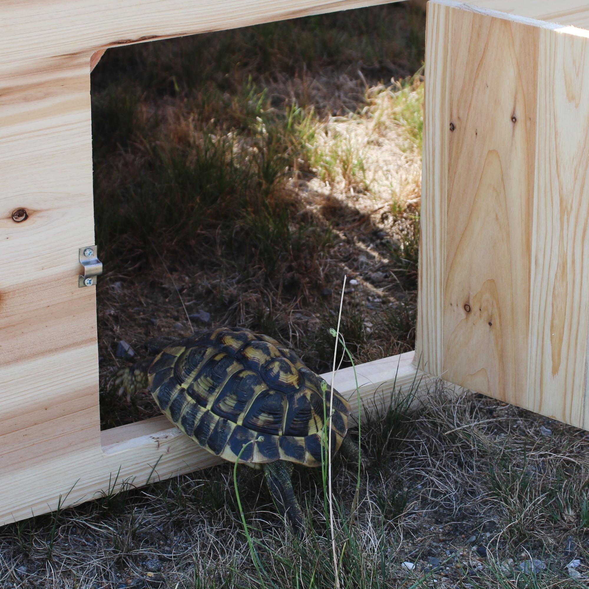 Enclos d'hibernation pour tortues de terre