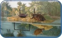 Isla flotante para tortuga