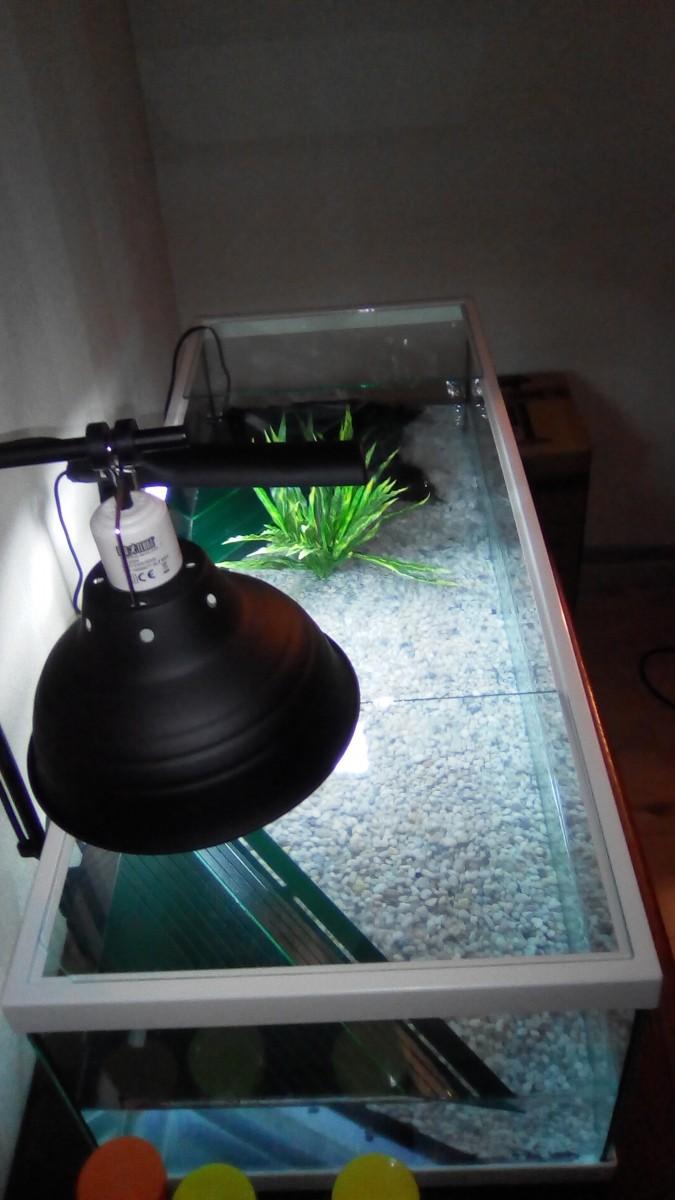 Support Glow À Maxi Pince Sur Light Avis De Lampe y8mvN0PnwO