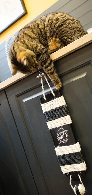 Griffoir pour chat Wall BOBBY Noir ou Naturel