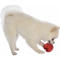 Brinquedo dentário para cães Wave BOBBBY - Disponível em 3 cores e 2 tamanhos