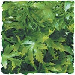 Plante cannabis artificielle 46cm_0