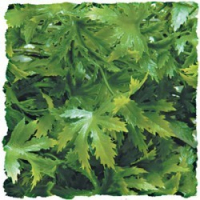 Plante cannabis artificielle 25cm (1)
