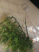 5819_Plante-madagascar-46cm_de_Wendy_42098824359ce33138bc7e0.58074854