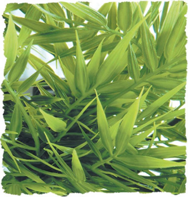 Plante madagascar 46cm