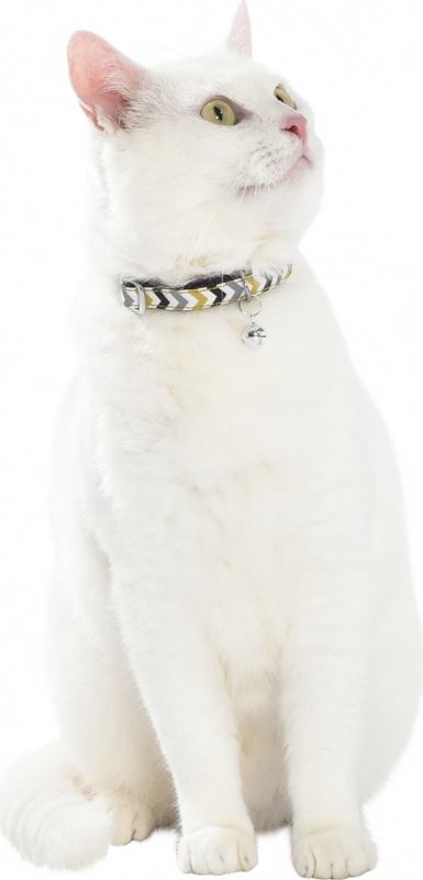 Collier Chat Zigzag BOBBY