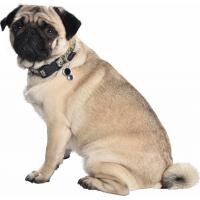 Collier pour chien en nylon Chamane BOBBY