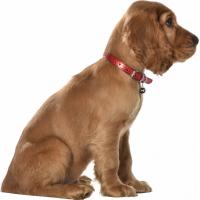 Collier en cuir Power pour chien BOBBY - Plusieurs couleurs