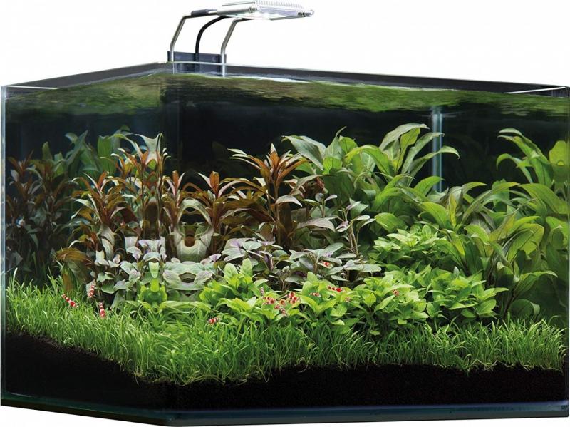 Aquarium Scaper's Filtre Avec 35l Tank Led Dennerle Basic Et wP80kXnO