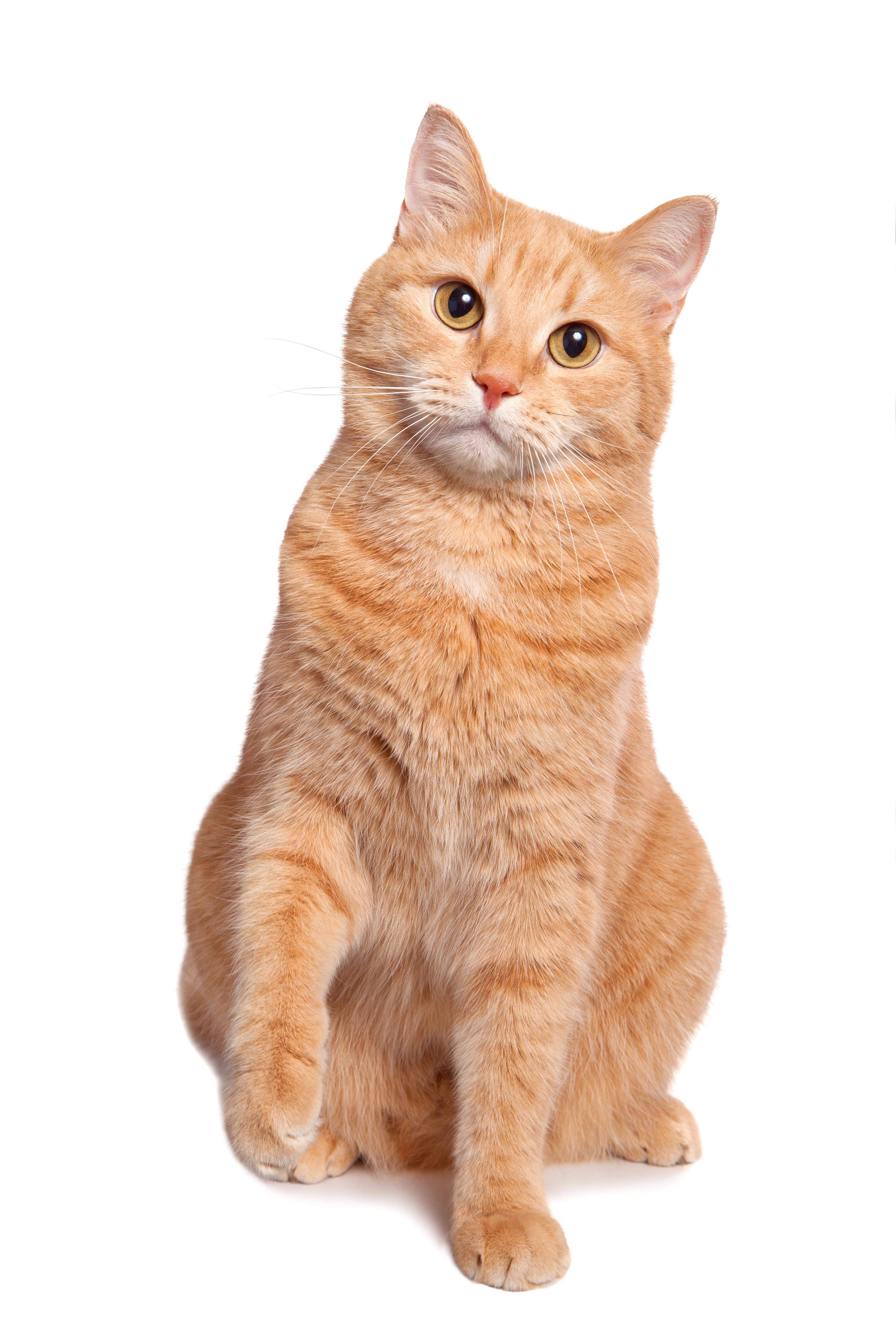 La nouvelle litière préférée de votre chat