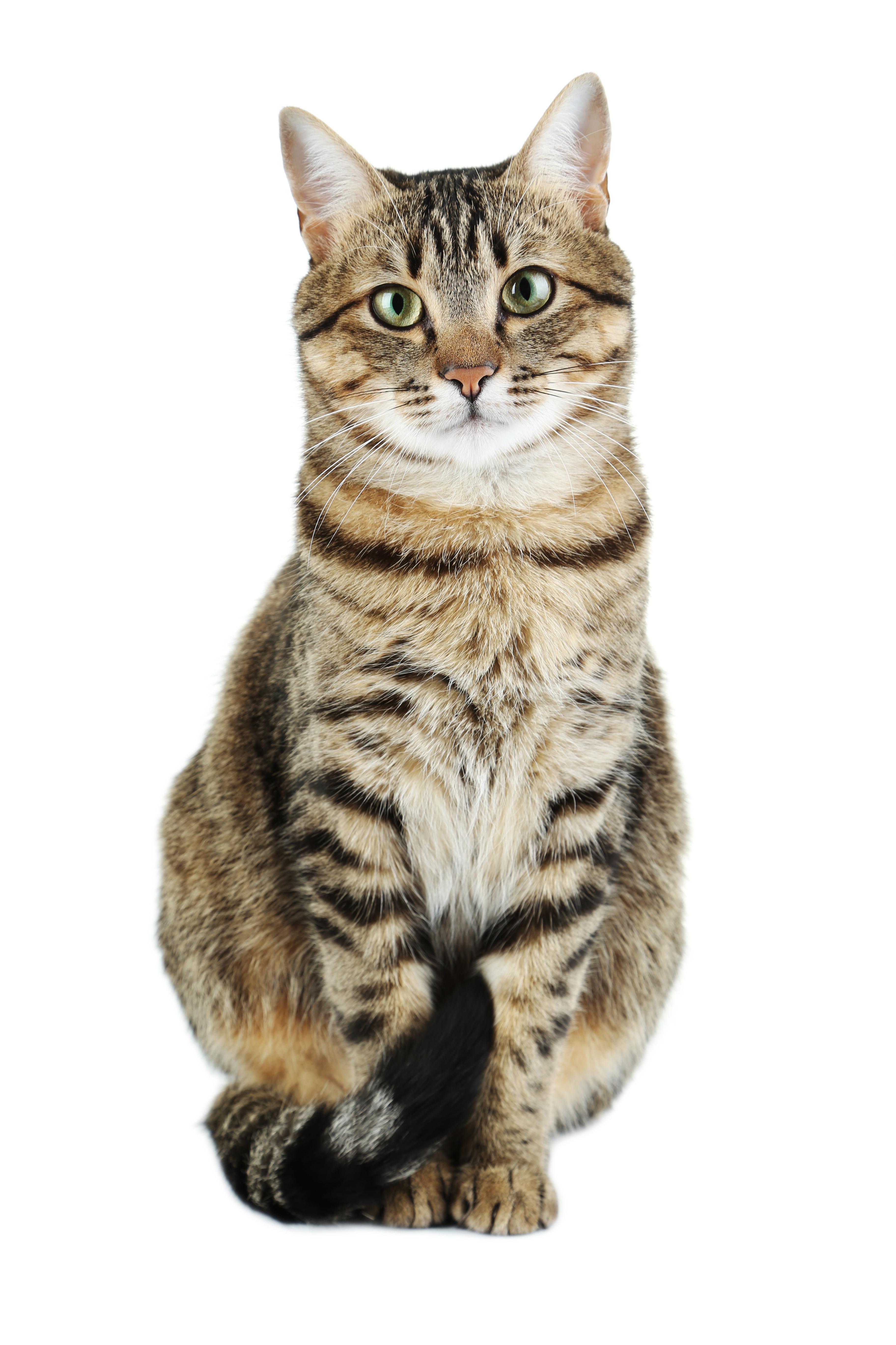 Litière pour chat BentoPearl Odor Control