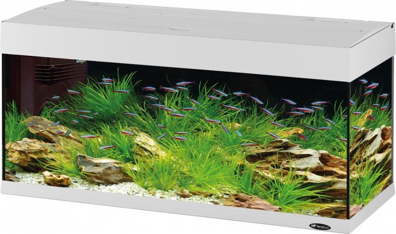 Aquarium Dubaï blanc