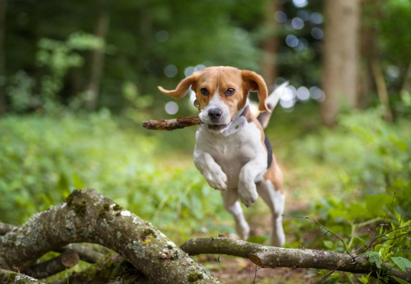 Traceur GPS pour chien Weenect Dogs