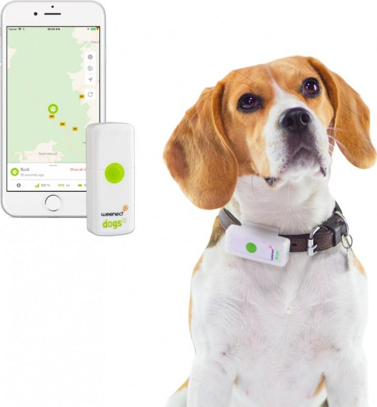 Localizador GPS para perro Weenect Dogs