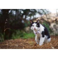 Localizador GPS para gatos Weenect Cats²