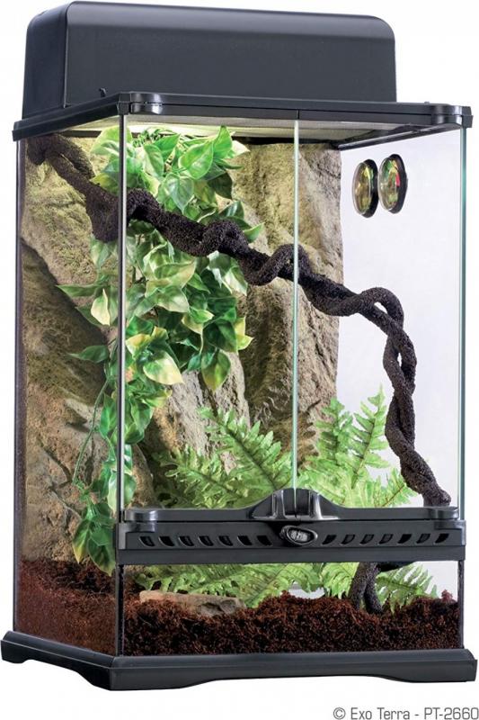 Exo-Terra Habita Rainforest Terrarium équipé climat tropical