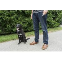 Collier de dressage Free Spirit pour chien