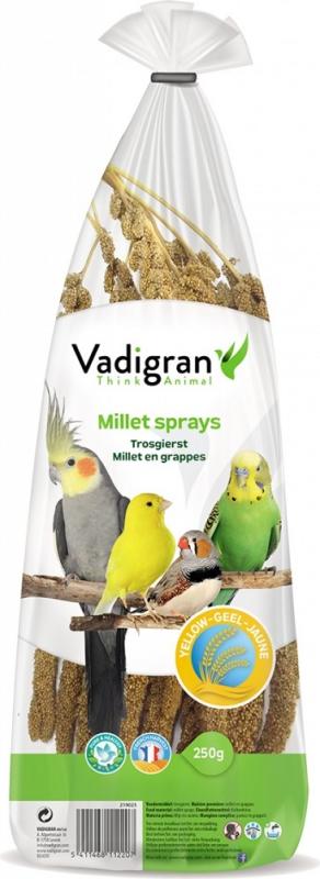 Espigas de Mijo amarillo Vadigran Producido en Francia