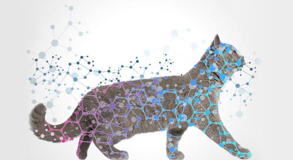 efficacités kit complet feliway pour chats