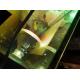 62364_Bombilla-Solar+-todo-en-uno-para-reptiles-y-anfibios-Reptil'us_de_Eva_21016358256028dbf07add71.93552499