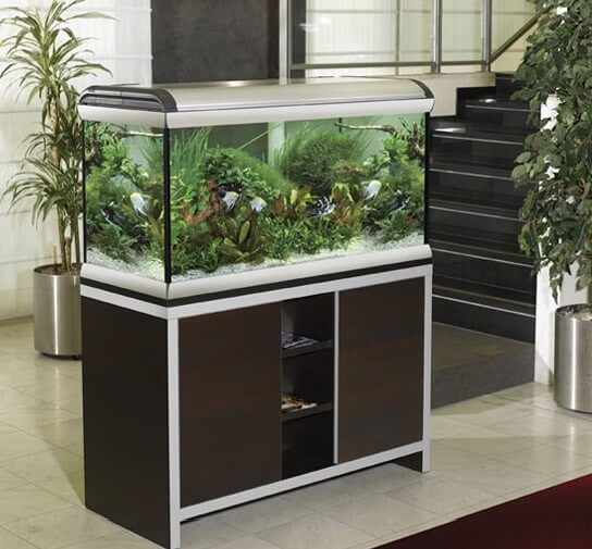 Aquarium star 120 330l aquarium et meuble for Meuble aquarium 120 cm