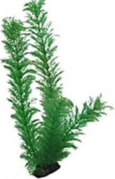 Plante Egeria 34 cm
