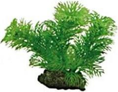 Plante Egeria 13cm