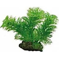 Plante Egeria 13 cm
