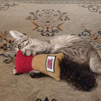 Speelgoed met catnip voor katten