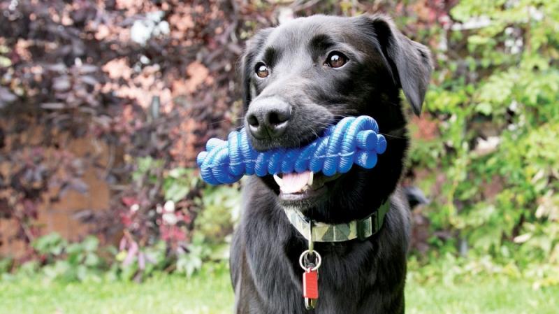 KONG Kazoo Jouet corde pour chien - Deux tailles disponibles