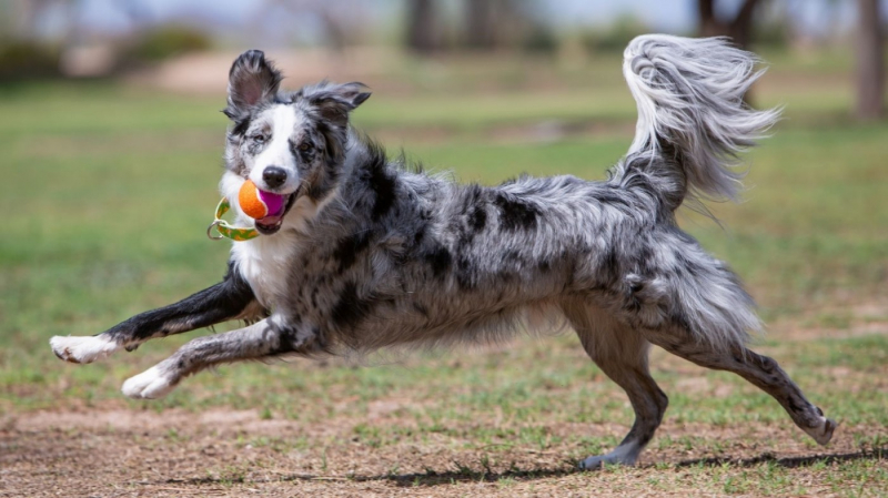 Balle pour chien Kong SqueakAir® Birthday Balls
