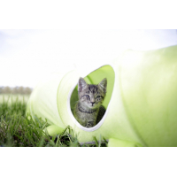 Kerbl Tunnel pour chat